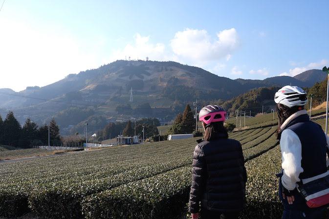 募集を締切ました。世界お茶まつり2019×スルガ銀行「茶の都しずおか」グループサイクリング50km @ ふじのくに茶の都ミュージアム